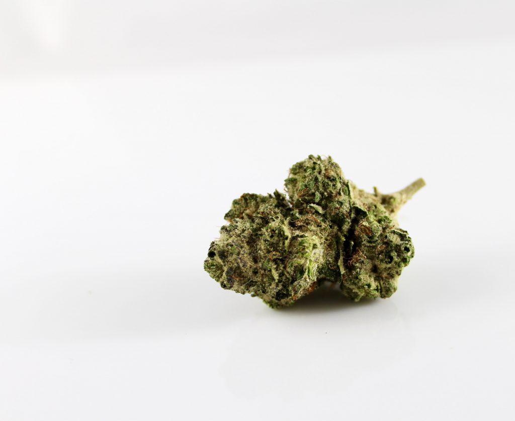 Bud of medical marijuana